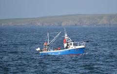 Bright Ray (DSC_0291) (AngusInShetland) Tags: scotland fishingboat shag shetland skarf brightray noness levenwick lk16
