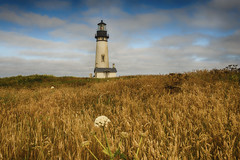 The human heart is as a frail craft on which we wish to reach the stars… (ferpectshotz) Tags: light lighthouse grass architecture oregon sunrise newport oregoncoast lighthouseatsunset yaquinaheadlight classiclighthouse lighthouseingrassfield