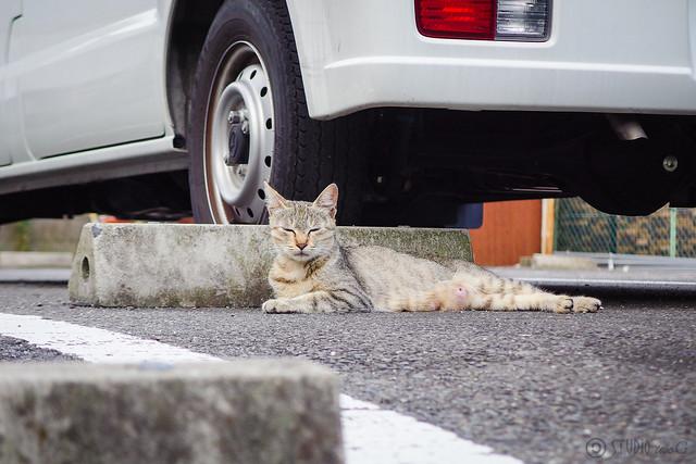 Today's Cat@2014-07-24