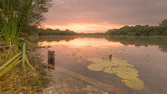 Sunrise over the pads (andy.muir12) Tags: lake sunrise fishing nikon pit filter lee nd roach grad pads ringwood d610