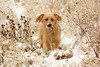 Pola (Paulaart18) Tags: dog pet black dogs nature golden hotdog sony retriever dachshund blond wiredhaired dsch2 paulaart18