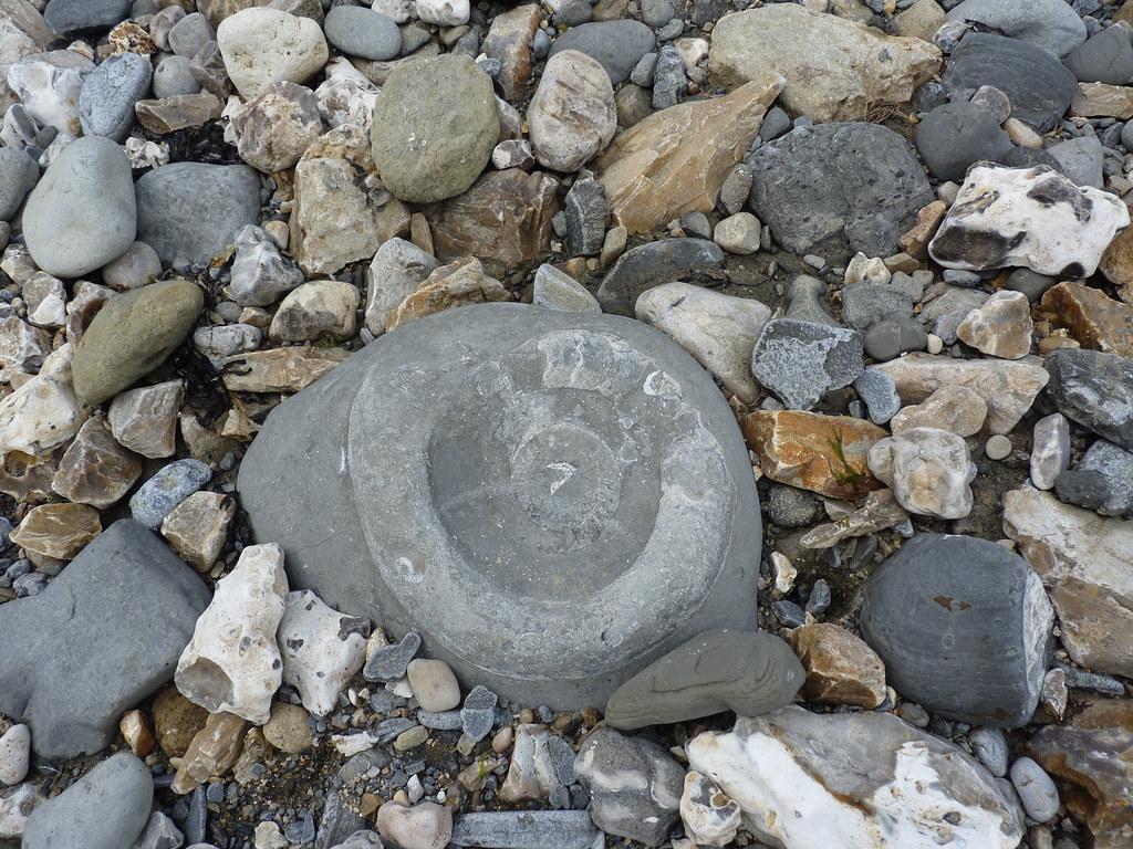 Ammonite at Monmouth Beach_3