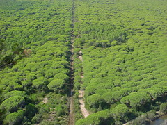 Parco dell'Uccellina 2008 (Katnis2016) Tags: parco parcodelluccellina uccellina maremma grosseto toscana italy
