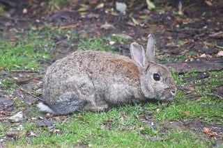 Healthy wild Rabbits !!