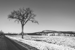 Last of Winter (Flapweb) Tags: vermont winter tree addison addisoncounty vergennes