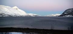 Contemplation (little_frank) Tags: grøtfjorden kvaløya tromsø norway nature landscape scenery skyline skandinavia sea occean snowy snow winter