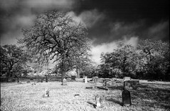BabyHeadCemetery_Infrared-644 (wanderingYew2 (thanks for 3M+ views!)) Tags: 120 6x9 babyheadcemetery fuji6x9 fujigw690 hillcountry r72filter texas texashillcountry blackandwhite cemetery film filmscan infrared infraredfilm mediumformat