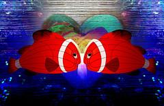Love (mfuata) Tags: love aşk gül rose balık red fish kırmızı dip aqua su aquarium