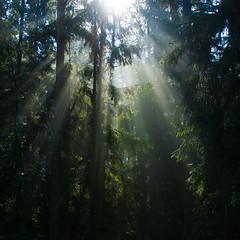 manifestation (G. For._active again) Tags: revelation eyeopener epiphany forest ligh mist beams morning outdoor