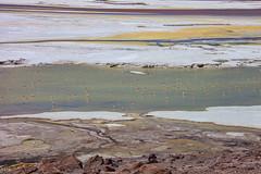 The colours of Atacama. (david takes photos) Tags: losflamencosnationalreserve reservanacionallosflamencos salardepujsa atacama chile flamingo flamingoes sanpedrodeatacama regióndeantofagasta x