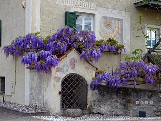 Südtirol (Italien) - South Tyrol (Italy) - Alto Adige - Italia > beim Klosterbauer in Algund