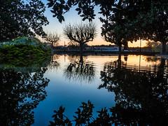Onde positive (3aptiste) Tags: montpellier peyrou parc lac reflet mirroir mirror symmetry france beau sunset coucher soleil ciel sky blue bleu vert ile island green tree leaf water art