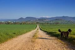Camino de vida (Verona_photos) Tags: alava araba cute animaladas dogs perro campo naturaleza