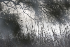 Marshland Musings: My Space (Ramesh Adkoli) Tags: landscape birds bharatpur d500 capturenx