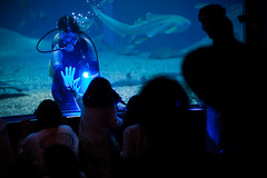 * (Laser Kola) Tags: osaka kaiyukan japan underwater hand touch happening blue deep streetphotography canon5dmarkii canon canon5dmkii 100mm 100m canonef100mf2 laserkola lasseerkola 2014 child fish shark streetphotograpghy