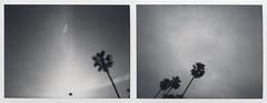 Black Hole Sun Diptych (LeandroF) Tags: polaroidweek polaroidweekspring2017 instax polaroid mio polaroidmio blackandwhite palmtree sun fuji instantfilm analogue