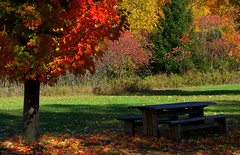 A place to sit and watch the colors go by (Captions by Nica... (Fieger Photography)) Tags: trees tree nature picnictable table picnic outdoor forest fall foliage landscape leaves colorful colors autumn quebec canada