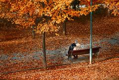 At the park (Paco CT) Tags: animal arbol dog gente mamifero otoño people perro tree autumn fall mammal terrassa barcelona spain esp man hombre park urban seat bench friend pacoct 2017 outdoor candidshot candidphotography candid