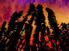 Firelight (bethrosengard) Tags: bethrosengard photomanipulation digitallyenhanced photoart digitalmagic digitalart