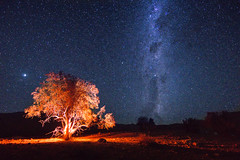 So many possibilities out there (lpcortesfotografias) Tags: universe cosmos valledeelqui chile milkyway vialactea nightscape stars outdoor tree astrophotography astrofotografia astronomy estrellas