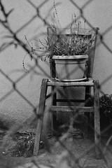 Left over (laetitia.delbreil) Tags: noiretblanc blancoynegro biancoenero blackandwhite film monochrome monocromo filmphotography argentique analogue analogico análogo ifeelfilm analogsoul filmisback filmisnotdead filmisalive ishootfilm westillcare jesuisargentique believeinfilm bologna italia italy strawchair onechair sediadipaglia chaisedepaille zeissikon ikonta52224 zeissikonnovaranastigmat novaranastigmat45mm135 kodaktrix400 400tx iso400 foldingcamera viewfinder ikonta35 35mm availablelight fixedfocallength outdoor vintagecamera