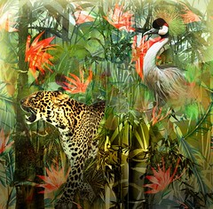 Tropicalism (jaci XIII) Tags: tropicalismo animal ave mamífero felino planta flores vegetal tropicalism bird mammal feline plant flowers