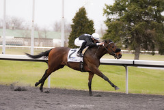 Stretch (Casey Laughter) Tags: racehorse turfway thoroughbred horse horseracing horses winner loser fun racing racetrack race track saddlecloth tack gate taa
