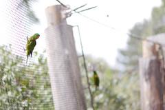 Prague zoo 1 (Radomir Cernoch) Tags: prague zoo animal parrot czechia czechrepublic loriini lorikeets lories