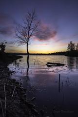 Sunset lakeside in Keizer, Oregon (Brook Terwilliger) Tags: brookterwilliger oregon keizer sunset night longexposure color pink water lake shore reflection