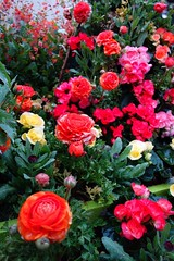 全国都市緑化よこはまフェア🌹 (sappymoon) Tags: 赤 red rx100 yokohama 赤レンガ みなとみらい 横浜 flower rose 花