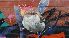 DVATE... (colourourcity) Tags: streetart streetartaustralia streetartnow graffiti melbourne burncity awesome colourourcity nofilters dvate dv8 dv8te adn sdm mdr f1 bird robin
