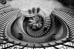 Aaron_Sesker-0557 (Aaron Sesker) Tags: achromatic bayarea birdseye blackandwhite ca california depth lines monochrome pattern patterns person plant sanfrancisco sf spiral stair stairs streetphotography