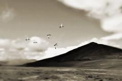 遥かなる旅路 (Soem Yoshida) Tags: sky bird travel outdoor mountain cloud migratorybirds