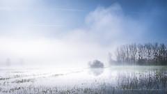 Chasseur de brume (Bertrand Thiéfaine) Tags: d750 ancenis brume maraisdegrée printemps marais herbe décrue arbres reflets ciel bleu