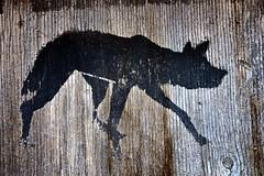 Wolf (luislessing) Tags: esslingen dick eisenlager badenwürttemberg schwarz holz wolf grafitti spray texture laufend maserung