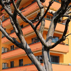 tree in front of orange house (dan.boss) Tags: balcony house facade orange spring tree locarno ticino switzerland