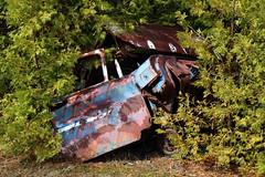 IMG_2625 (Irina Souiki) Tags: rusty crusty cars mcleansautowreckers milton ontario old oldcars