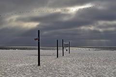 Pelicans Over Hermosa Beach (AntyDiluvian) Tags: california beach la losangeles hermosabeach strand thestrand dusk evening sunset pelicans volleyballnet