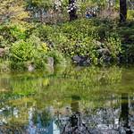 Mouri Garden (毛利庭園)