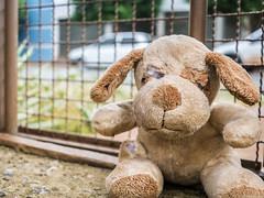 Finado pelúcia (Rapha777) Tags: pelúcia brinquedo cachorro urso rasgado mordido quebrado velho sujo