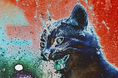 IMG_1305_S_1 (Pablo Alvarez Corredera) Tags: mundo rural mascota gato gata gatita dormi furiosa asesina colmillos