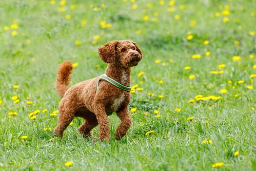 Cute dog: Set