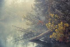 The Reminder (karenhunnicutt) Tags: fog autumnmorning minnesota lakes karenhunnicuttphotographycom karenhunnicutt fineartphotographer