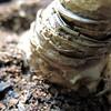 HMM! Amaryllis bulb edition (karma (Karen)) Tags: plants texture home dof bokeh curves maryland baltimore amaryllis bulbs macros hmm squared macromondays