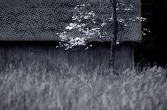 springtime in the meadow (dotintime) Tags: tree grass season spring shed meadow megan lane dotintime