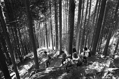 Weekend Hikers Negotiate a Decent (The 10 Thousand Things) Tags: trees bw mountain forest fuji iso400 trail cedar fujifilm neopan hikers mitake fujinon klasse 28mm28 explored neopanpresto klassew chichibutamakai fujinon28mm28