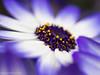 Growing (David S Wilson) Tags: uk flowers england flower ely fens 2014 flowersplants davidswilson lightroom5 olympusomdem5 leicadgmacroelmarit12845asphlens