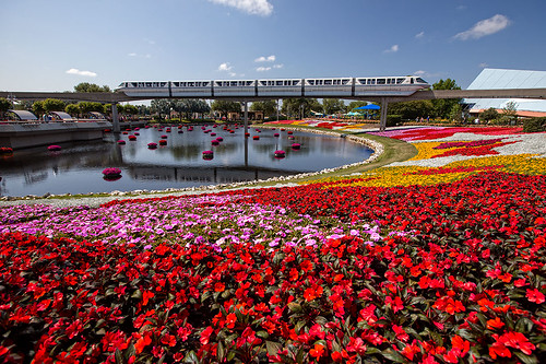 Monorail-Over-Sea-of-Color