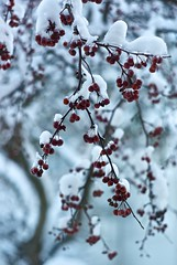 20131224_L1011443 (pixelsrzen) Tags: winter snow bokeh digitalcamera adobergb1998 leicam82 appleaperture3 leicasummiluxm1145011868