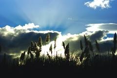 Sunscape (TravLav) Tags: sunset newzealand nz northisland aotearoa
